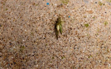 Ants eating dead grasshopper on the conc?ete floor