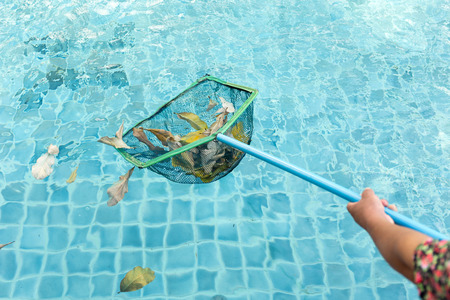Cleaning swimming pool of fall leaves with cleaning net in the morning Standard-Bild