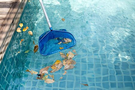 Cleaning swimming pool of fallen leaves with blue skimmer in summer time Stock Photo