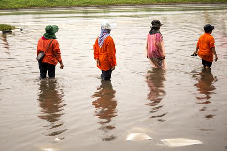 アジアの人々 が道路をモンスーンの季節の間にタイの洪水の上を歩く