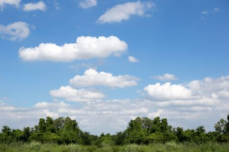 atmosphere: Beautiful white clouds with blue sky and green bushes clear day