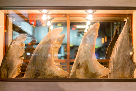 Shark fins on display in glass window in Chinese restaurant