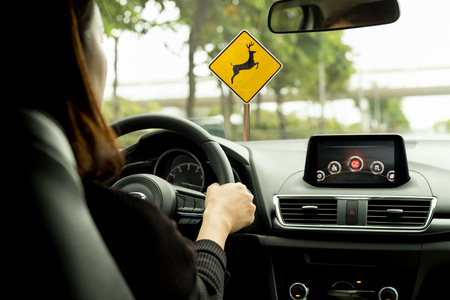 Woman driving a car on country road with deer crossing wraning sign on the road
