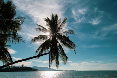 Coconut palm tree on the ocean against turquoise sky in koh samui island in Thailand. Imagens