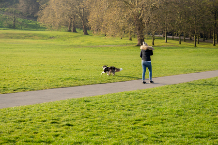 Woman playing fetch the ball with her border collie dog in the park.