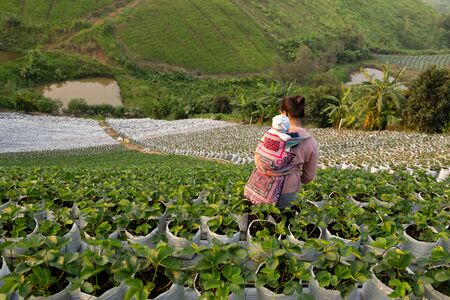 Hill tribes woman with baby on her back with organic fresh strawberry field. Stock fotó