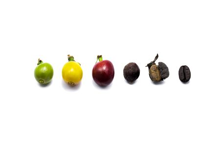 The different stages of coffee beans isolated in white