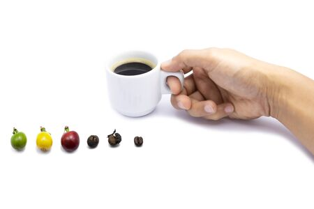 The different stages of coffee beans with hand holding coffee cup isolated.