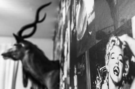 Marilyn Monroe on a wall with a white antelope in the background