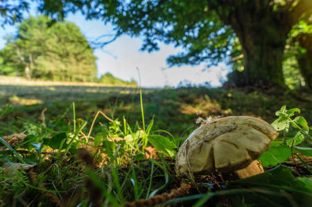 cep: A cep at the limit of the forest and meadow