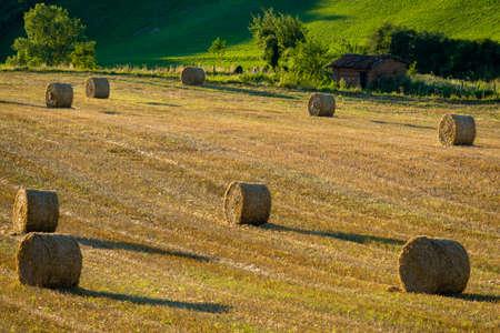 tarn: Bales in a field in the Tarn region, France