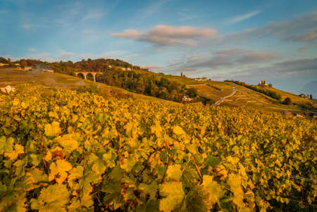 Sunset over geneva lake and vineyards in Lutry, close to Lausanne, with yellow autumn colors