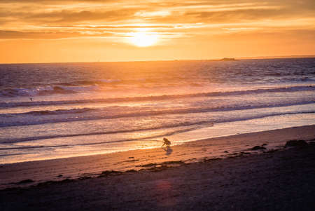 Child peacefully playing in the sunset light at the ocean