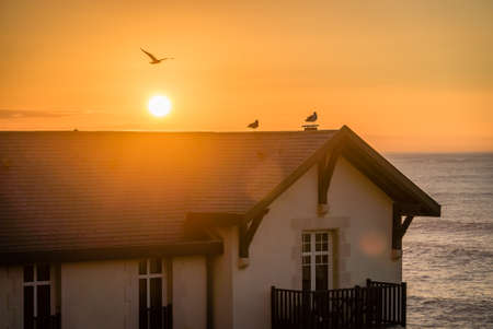 Birds on a roof in the sunset with ocean in the background