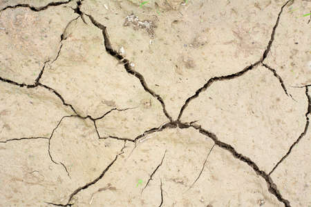 aridness: Cracks in the dried soil