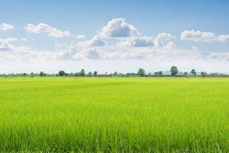 Champ vert et le ciel avec des nuages ??blancs. Banque d'images - 31386811