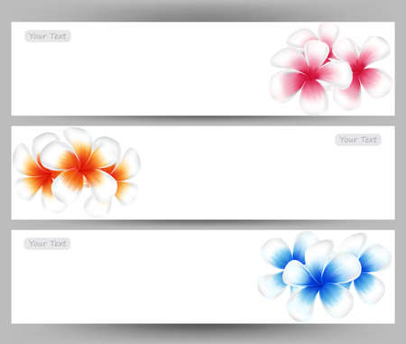 topical: illustration vector of Hawaii flower Frangipani, colorful Plumeria on white background  brochure template.