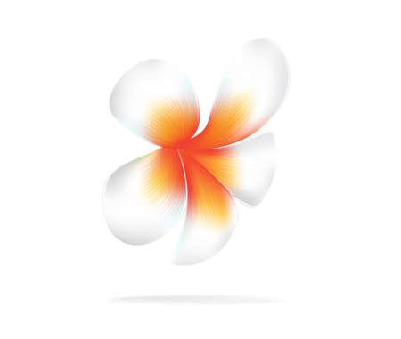 plumeria on a white background: illustration vector of Hawaii flower Frangipani, white Plumeria on white background Illustration