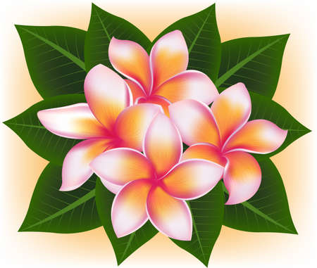 topical: illustration vector of Hawaii flower Frangipani, plumeria rubra and green leaves