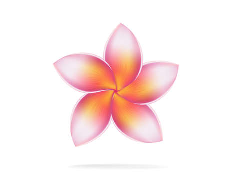 illustration vector of Hawaii flower Frangipani, plumeria rubra on white background