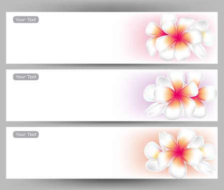 Set Von Hibiskusblüten Und Broschüren. Vektor-Design-Vorlagen ...