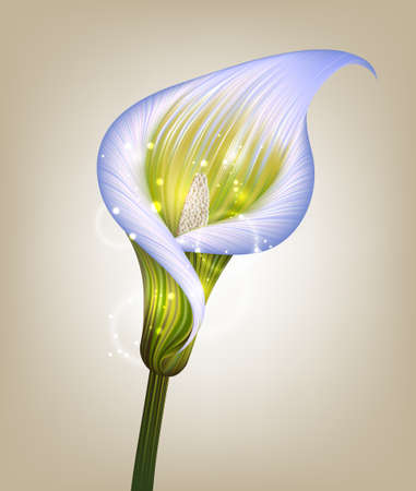 creative vector illustration of a beautiful abstract purple calla lily flower Stock Illustratie