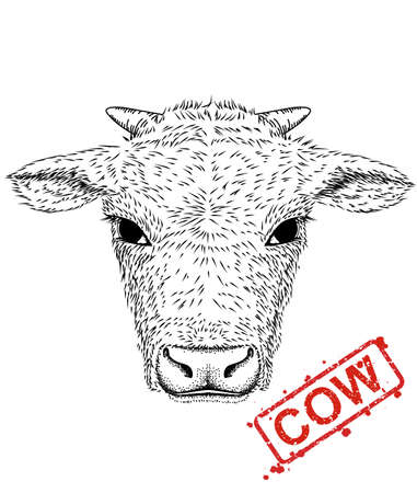 illustration of hand-drawn pen and ink black on white background character a cow rabbit head. - Vector Stock Vector - 120810438