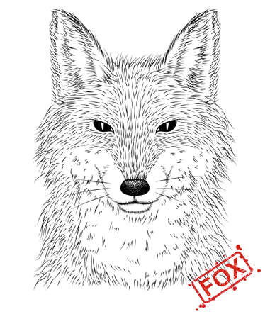 illustration of hand-drawn pen and ink black on white background character  a fox head. Ilustração