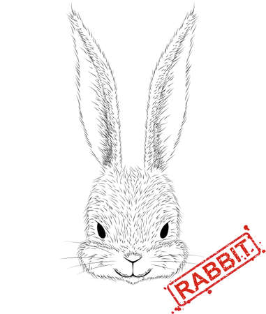 illustration of hand-drawn pen and ink black on white background character  a rabbit head. Illustration