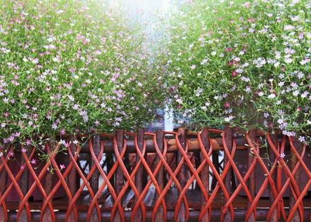 Flowers Stock Photo - 16996267