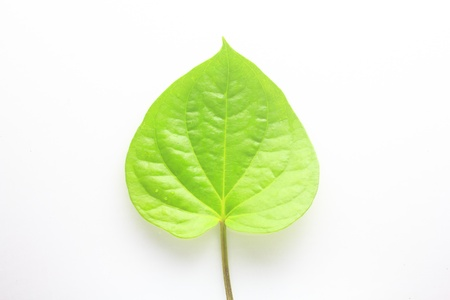 Green betel leaf isolated on the white background photo