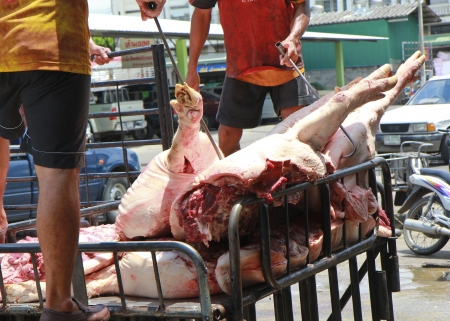 slaughtering: Farmer carries out a slaughter of pig