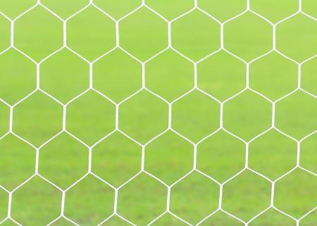white football net, green grass. photo