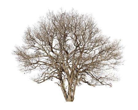 Tote trees.Dead Bäume auf einem weißen Hintergrund. Standard-Bild - 24615741