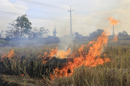 Burning of straw on the field.