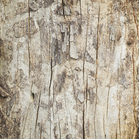 close up of dead tree trunk. photo