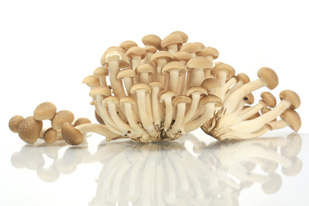 Brown beech mushrooms, Shimeji mushroom, Edible mushroom. photo