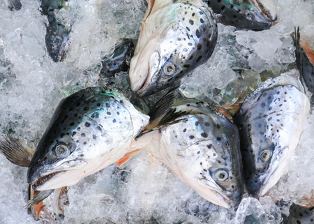 Close up of fresh salmon fish on open market.