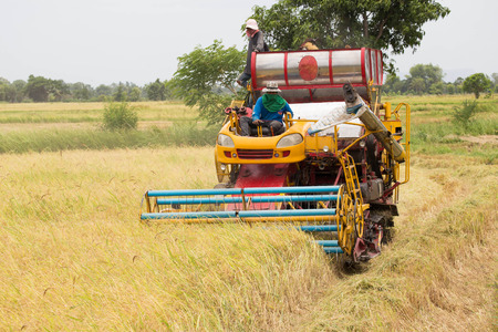 Working Harvesting Combine in the Field of rice. photo