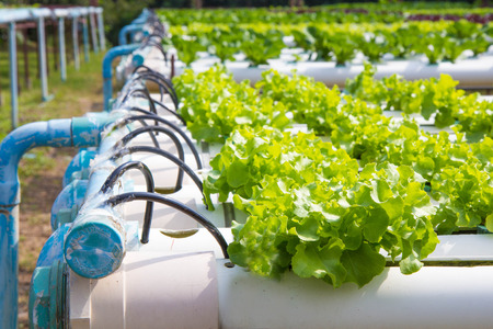 Organic hydroponic vegetable garden. Stock Photo