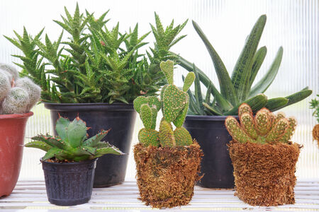 types of cactus: different types of cactus. Stock Photo