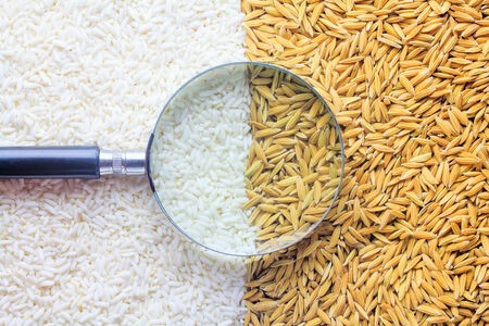 rice grain with Magnifying glass.