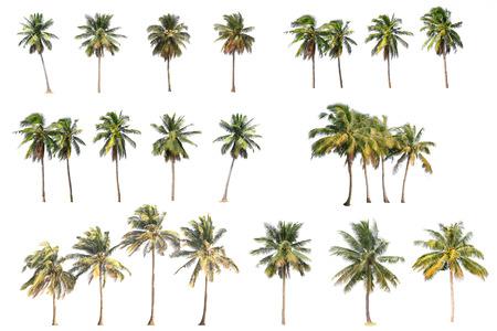 Verschil van de kokosnoot boom geïsoleerd op wit. Stockfoto - 34701180