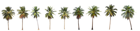 tree detail: Difference of coconut tree isolated on white