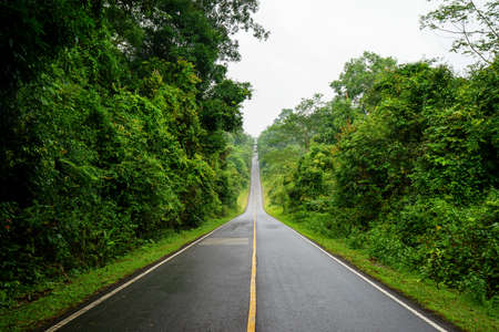 khaoyai: Forest road at Khaoyai National Park (The World Heritage of nature) Thailand. Stock Photo