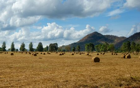 hay bales: Hay bales on the field in Thailand.