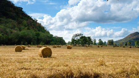 combines: Hay bales on the field in Thailand.