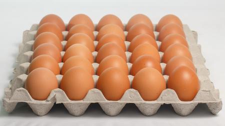eggs panel on white background.