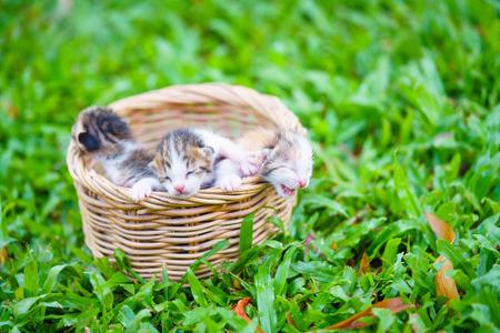 Three newborn kittens sitting in wicker basket on green grass.