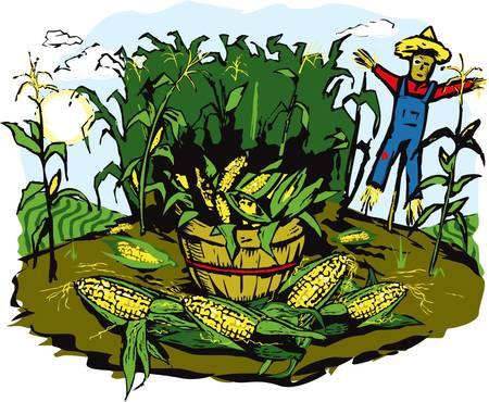 Corn Crop Harvest Stock Vector - 9886577